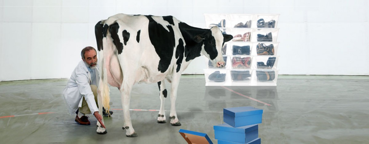Agricultural Tools Manufacturer Supplier Companies Ltd Mail: Supplier Of Dairy Farming Equipment