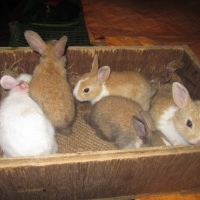 Rabbit Breeder