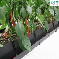 Soilless Trough Cultivation