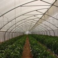 Greenhouse and Nethouse Protective Cultivation