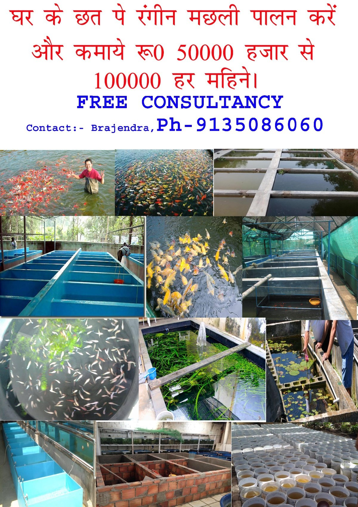 Fish aquarium in vadodara - Fish Farming Consultancy