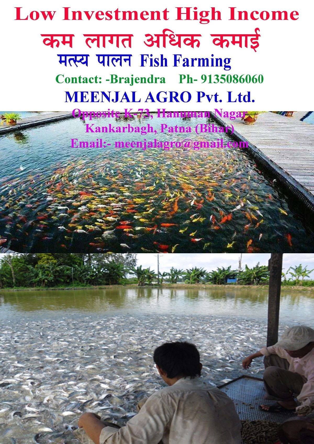 Fish aquarium in varanasi - We Provide Free Consultancy For Aquarium Fish Farming And Pond Fish Farming