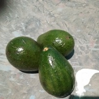 Avocado Available for whole the year : 8249361340