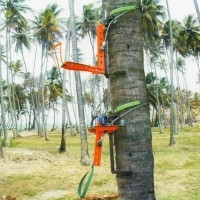 coconut tree eazy climber