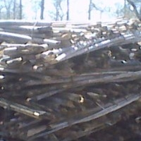 Bamboo cane for Vegetable Farming