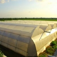Manufacturer of Supplier of Greenhouse/Poly House