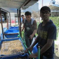 Aquaponics for Institutions / Schools