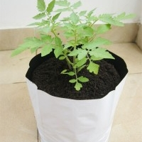 Grow bags In kerala