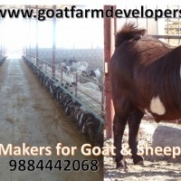 goat farms in telangana