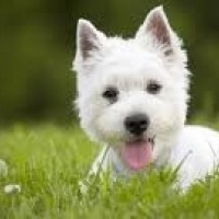 Best servicing centre - We Take Your Pet's Health Seriously
