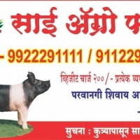 Sai agro and pig farm