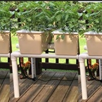 Dutch Bucket  Hydroponic System