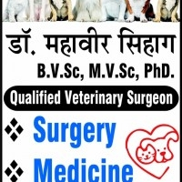 Dr Mahavir Sihag Pet Care, Dog, Birds, Rabbits clinic
